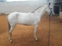 Vendo égua de 4 anos registrada