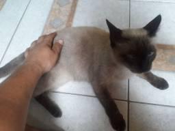 Doacao de gato castrado