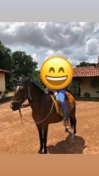Título do anúncio: Cavalo manso e muito bom pra lida.