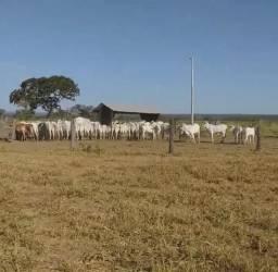 Fazenda em Rosário Oeste 1.500 hectares