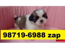 Canil Filhotes Top Cães BH Lhasa Poodle Yorkshire Basset Shihtzu Maltês