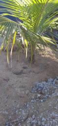 Plantas frutiferas