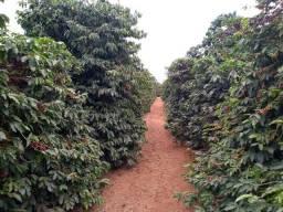 Sítio 7,5 hectares