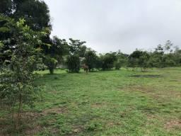 Vendo linda fazenda com 890 hectares na AM-010  liga os municípios de Manaus, Rio Preto