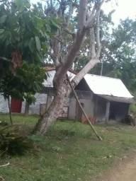 Vendo fazenda em presidente Tancredo Neves
