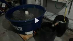 Título do anúncio: criaçao de peixe caixa de agua