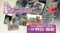 Gatos de Luxo