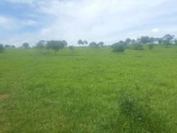 Fazenda 160 Alqueires Municipio Cocalinho