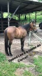 Vendo cavalo de vaquejada