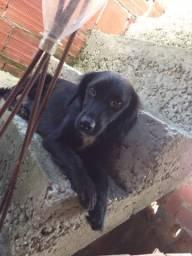Cachorro para adoção responsável