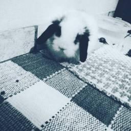 Mini Fuzzy Lop