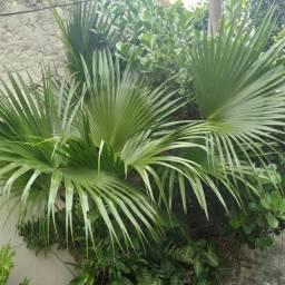 Título do anúncio: Plantas lindas