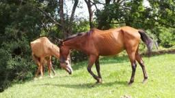 Fazenda 69 Alqueires Municipio Cocalzinho Esculta Proposta
