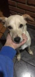 Doação de linda cachorrinha