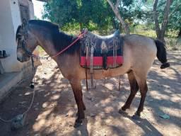 Vendo cavalo manso para mulher e criança andar muito docil
