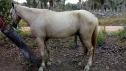 Cavalo palomino