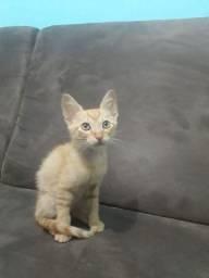 Doa-se filhote de gato urgente Campo Mourão
