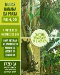 Mudas de Banana da Prata Anã
