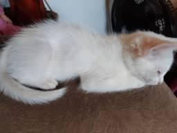 Doa se gatinhos brancos