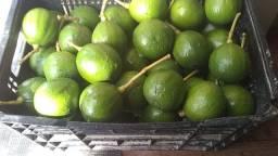 Vendo abacate 2 reais o Kg