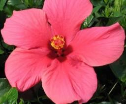 Brecho Flor do Havai