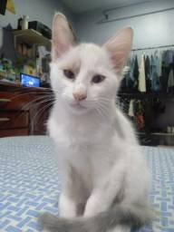 Adoção urgente. Filhotes de gato