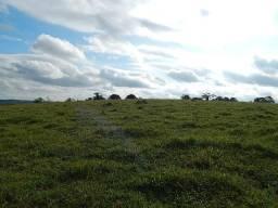 Fazenda de 89 alqueires para pecuária (Nogueira Imóveis)