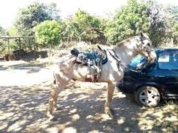 Cavalo Baio Loiro