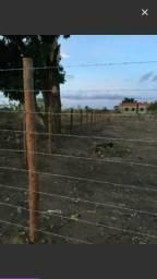 Terreno 1500m na avenida muniz falcão