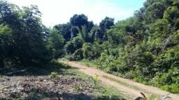 Estrada do Autazes / Lago do Mamori / 100 hectares