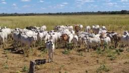 Fazenda em Barreiras. A 140 km
