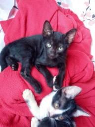 Doa-se esse gatinho preto