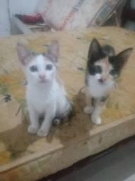 Lindos gatinhos pra adoção responsável