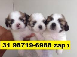 Canil Filhotes Cães Lindos Top BH Lhasa Yorkshire Bulldog Beagle Shihtzu Maltês