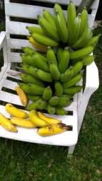 Muda de banana maça