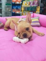 Bulldog françe femea disponivel