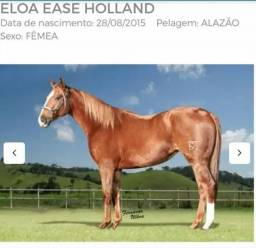 Eloa Ease Holland