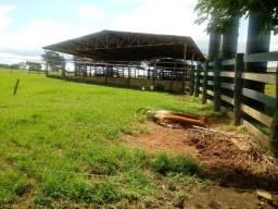Fazenda 241 Alqueires Municipio de Cocalzinho
