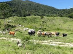 Fazenda em Macaé 365 hectares 75% de mata