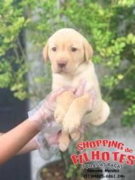 Labrador filhotes maravilhos, unica loja com um rede de 7 clinicas *