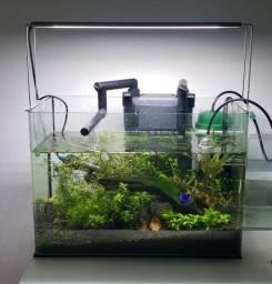 Título do anúncio: Aquario plantado 24L media demanda