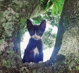 Gatinhos abandonadas( Adoção responsável) 1 mes e meio