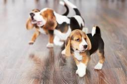 Belos bebês de beagle o snoop a pronta entrega