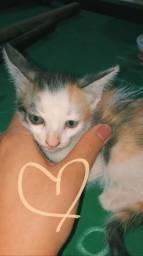 Doação de gato!