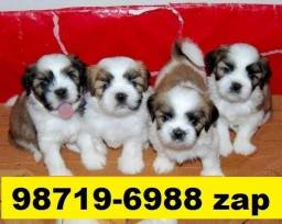 Canil Filhotes Cães Belos BH Lhasa Maltês Poodle Basset Yorkshire Shihtzu Bulldog