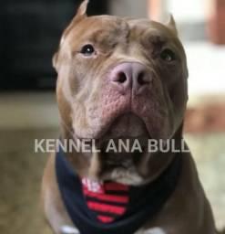 Canil Especializado na Raça American Pitbull Terrier Em ATÉ 12X No Cartão+ S,O.R.T.E.I.O