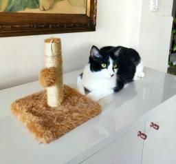 Arranhador / brinquedo para gatos