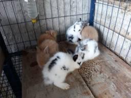 Nini coelhos