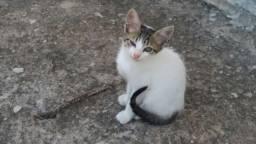 Gatinhos para Adoção em São Mateus