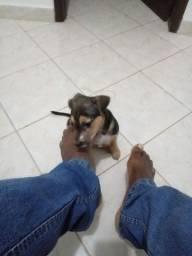 Pet lindo e meigo R$350